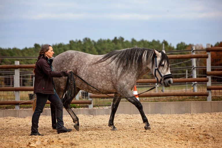 Tanja Janke - Coaching mit Pferden bei Mobbing in Schule, Uni oder Beruf