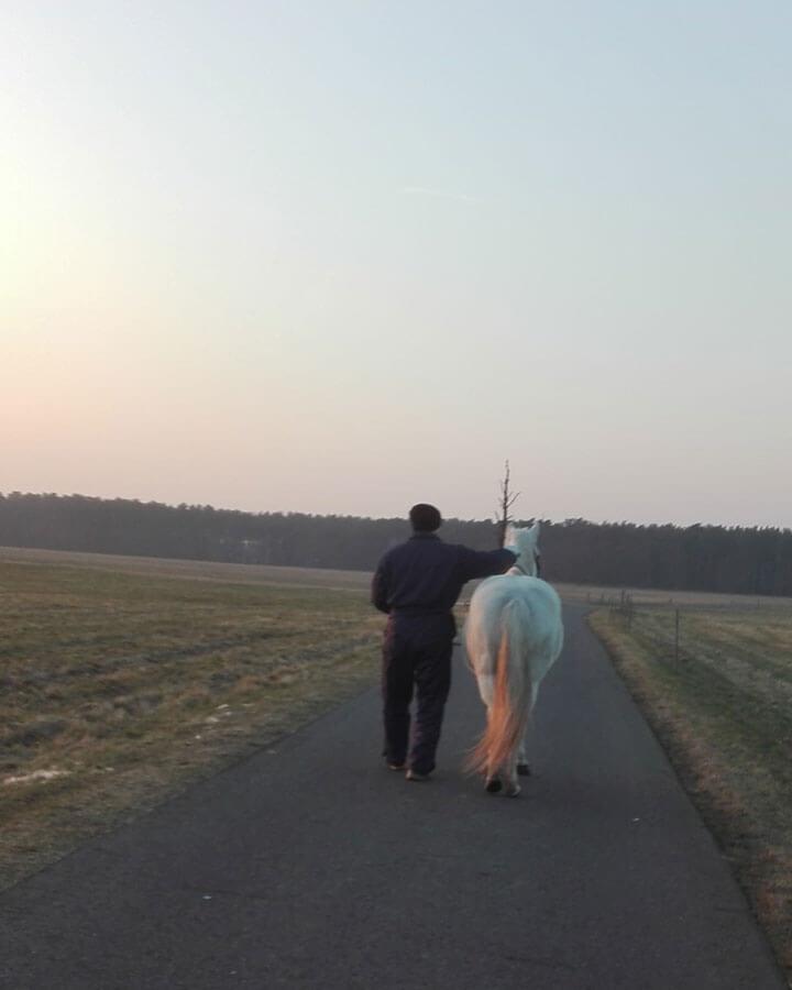 Pferdegestützte Psychotherapie in Drebkau/Brandenburg